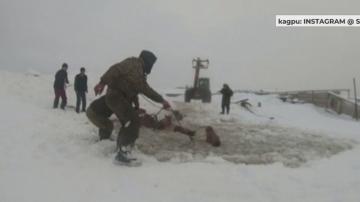 Коне бяха спасени от удавяне в Русия