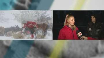 Изоставени коне умират от студ и глад в Осоговската планина