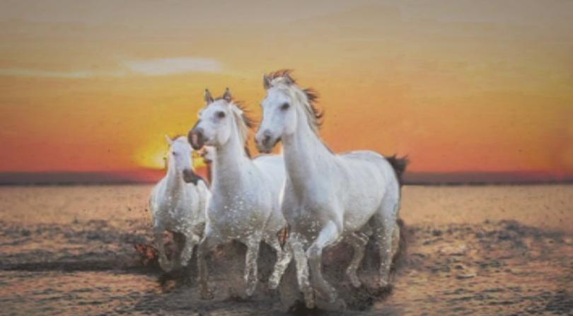 Първото опитомяване на диви коне се е случило и по нашите земи