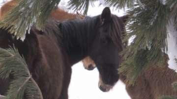 Разследват собственика на премръзналите коне и за злоупотреба с евросредства