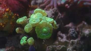 Мини коралов риф в Природонаучния музей в Пловдив