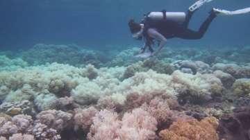 Коралите в Големия бариерен риф опасно избледняват