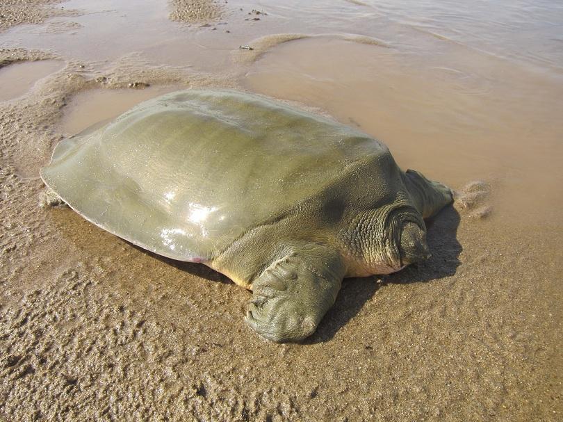 откриха 100 вида животни растения района река меконг азия