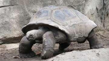 Откраднаха 123 бебета на костенурки от Галапагоските острови