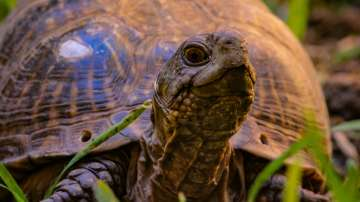 Във Франция откриха коруби на костенурки на около 25 милиона години