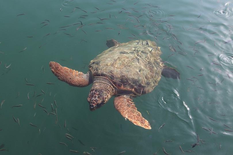 лодки туристи раняват защитен вид костенурки закинтос