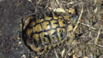 На съд заради незаконна продажба на костенурка