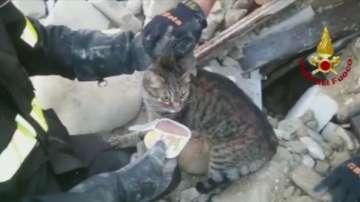 Две котки бяха спасени 16 дни след земетресението в Италия