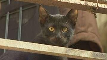 Протест в центъра на Пловдив заради принудителното извеждане на кучета и котки