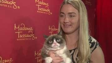 Сърдитата котка на турне в САЩ
