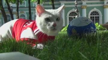 Руската котка Ахил ще предсказва резултатите на Световното първенство по футбол