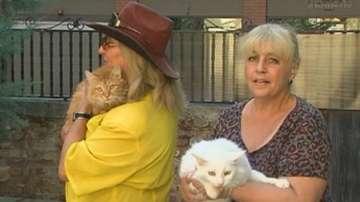 Безпрецедентен казус: Принудително извеждат кучета и котки от дома им в Пловдив
