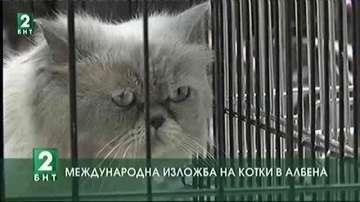 Международна изложба на котки в Албена