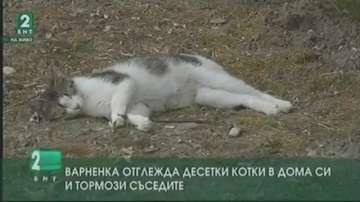 Варненка отглежда десетки котки в дома си и тормози съседите