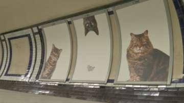 Котки в лондонското метро