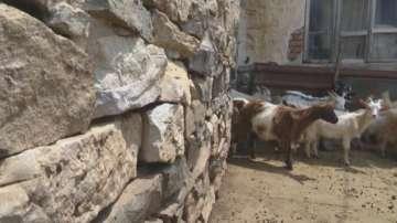 Земеделският министър получи подкрепа от 26 животновъдски организации