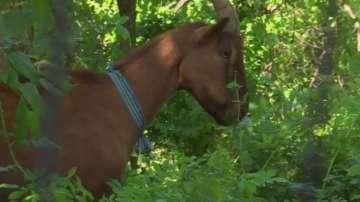 Кози разчистват парк в Ню Йорк