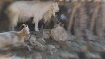 Ветеринари ще направят втори опит за вземане на проби от животни в Болярово