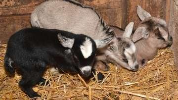Първите бебета за годината се родиха във Варненския зоопарк (СНИМКИ)