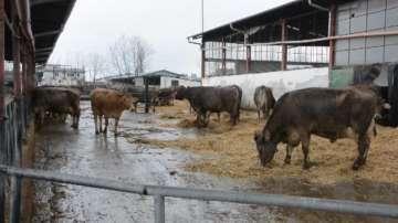Унищожават животни заради болест