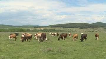 """Танева: До декември сектор """"Животновъдство"""" ще получи общо 230 млн. лв"""