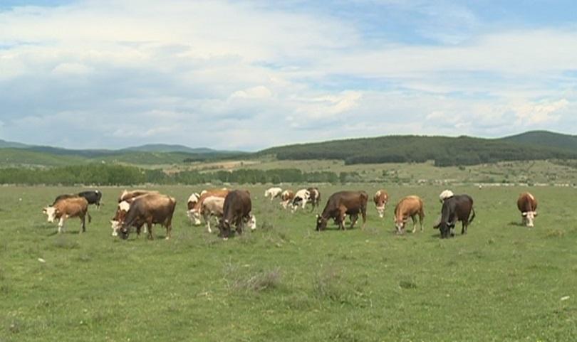 танева декември сектор животновъдство получи общо 230 млн