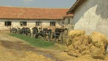 МЗХГ: Има промяна в начина на субсидиране на животновъдите