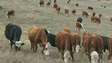 Бюрократични трудности за фермери в Благоевградско