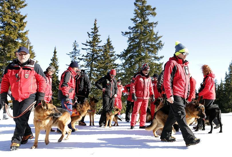 снимка 6 Как се провежда спасителна операция с кучета