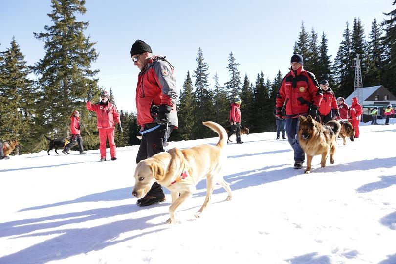 снимка 4 Как се провежда спасителна операция с кучета