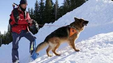 Как се провежда спасителна операция с кучета