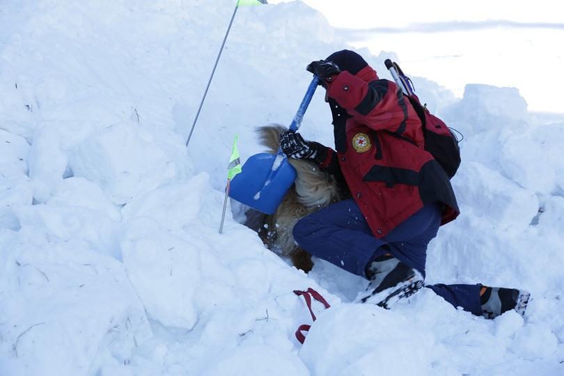 снимка 3 Как се провежда спасителна операция с кучета