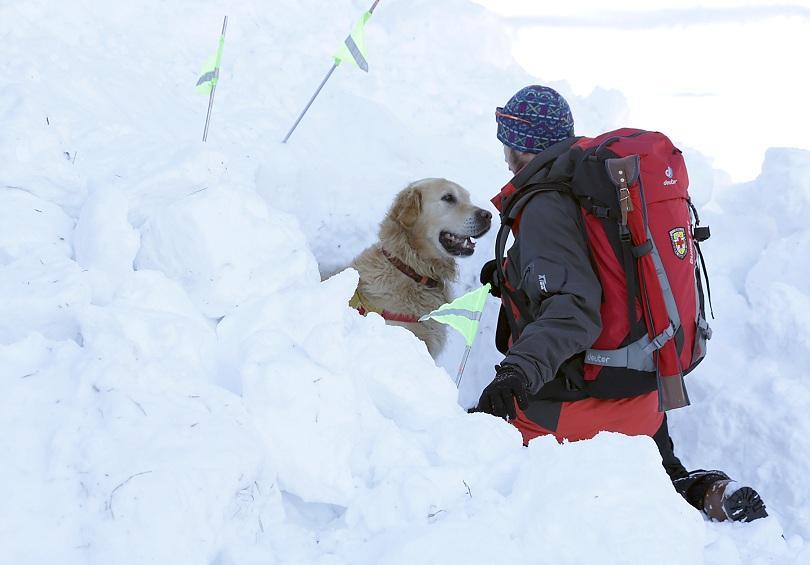 снимка 2 Как се провежда спасителна операция с кучета