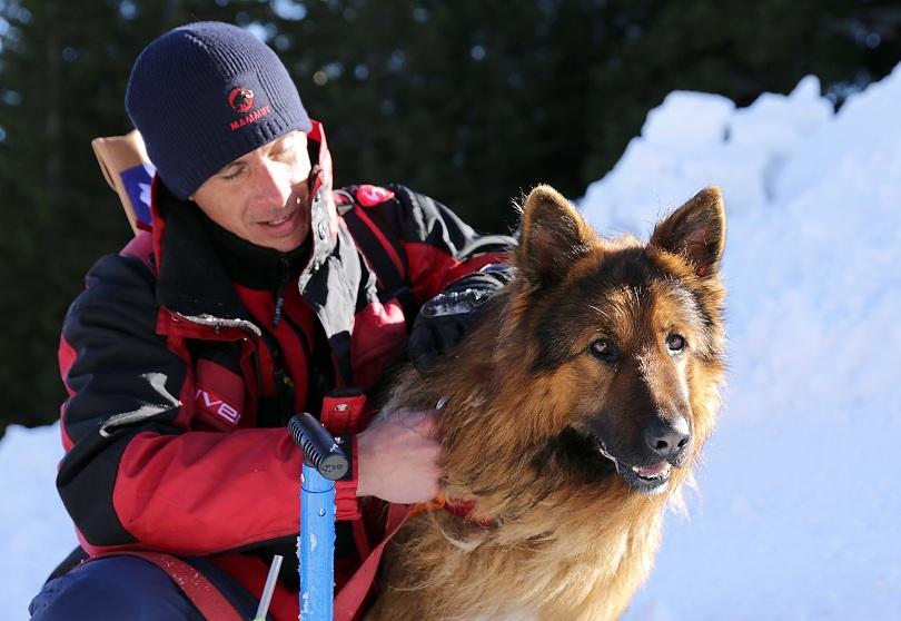 снимка 1 Как се провежда спасителна операция с кучета