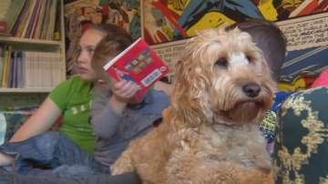 Куче спаси дете от центрофугата на пералня