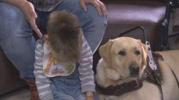 Куче помага на дете да проходи и проговори