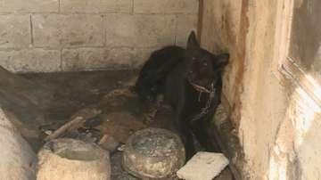 Разбиха незаконна мрежа за продажба на кучета във Варна