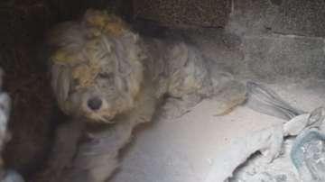 Куче оцеля при пожара в Мати