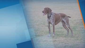 Как се тренират ловните кучета?
