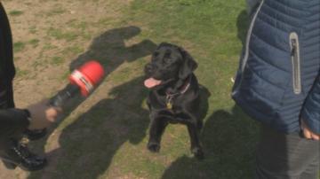 Масови проверки на домашни кучета след зачестилите инциденти с ухапани хора