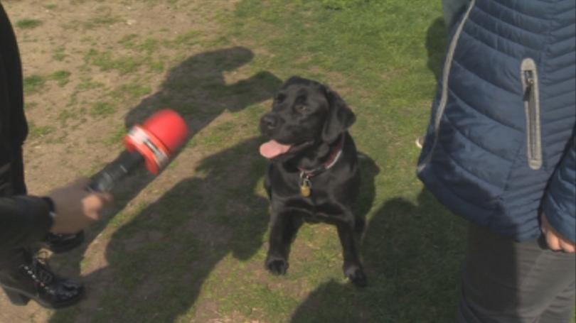 Снимка: Масови проверки на домашни кучета след зачестилите инциденти с ухапани хора