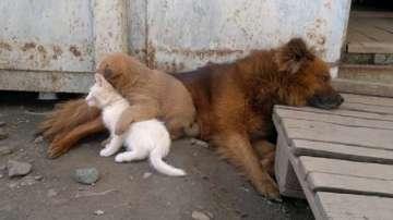 Тайванският парламент забрани консумацията на котки и кучета