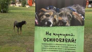 Много желаещи да осиновят куче в столичния парк Заимов