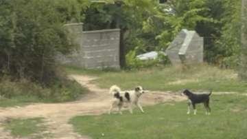 Депутатите приеха на първо четене по-строги правила за разхождане на кучета