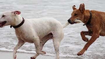 Ще има ли по-строги санкции за собствениците на кучета?