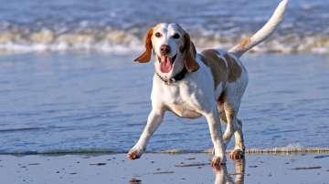 Скачат глобите за извеждане на кучета без повод и намордник