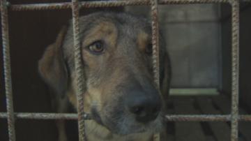 Спазва ли се Законът за защита на животните в общинския приют в Дупница?