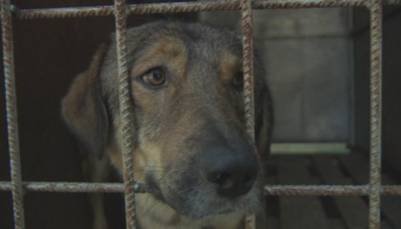 Защитници на животните сигнализират за системно нарушаване на Закона за