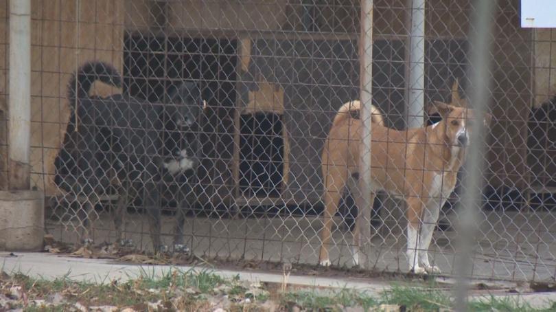 Около 1500 кучета от приюта в Горни Богров все още