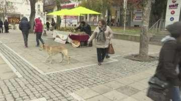 Жители на Благоевград се оплакват от увеличаване на бездомните кучета в града